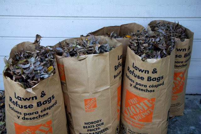 bags n bags of leaves