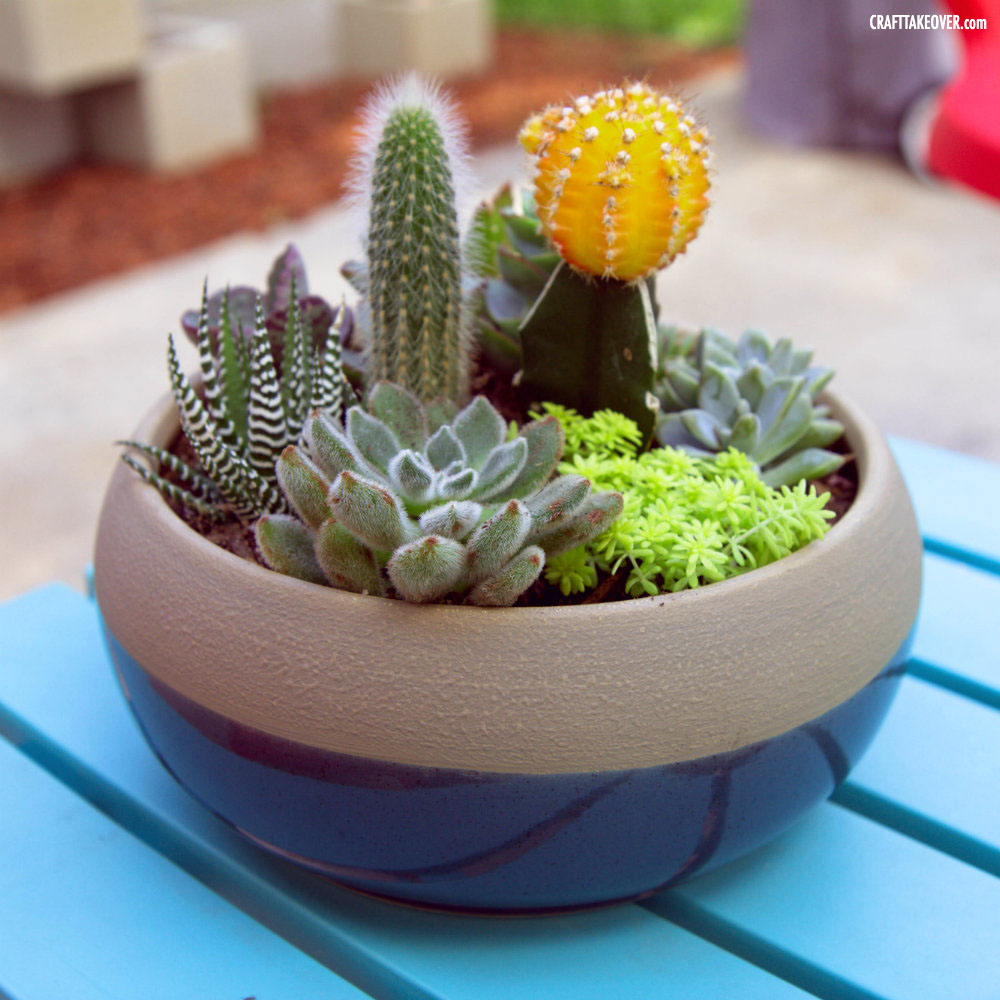 Craft Takeover Succulent Container Garden