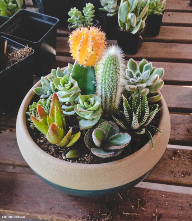 My New Succulent Container Garden