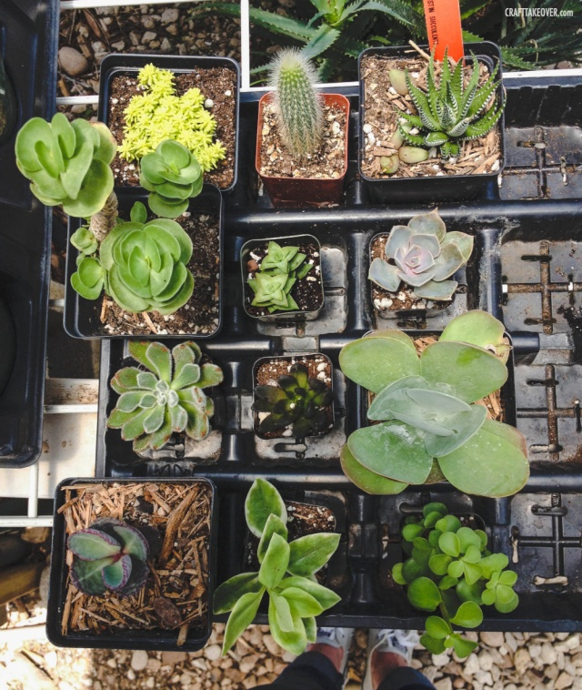 Plants from East Austin Succulents