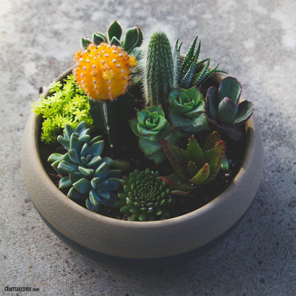 Beautiful Succulent Container Garden From Craft Takeover