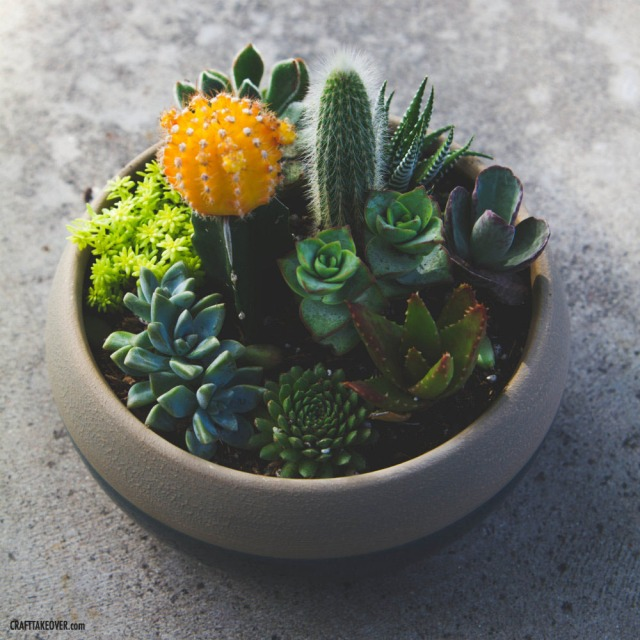 Succulent Container Garden from Craft Takeover